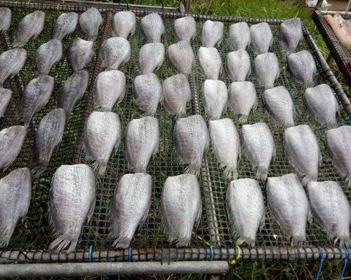 แหล่งขายส่งปลาสลิดบางบ่อ แท้ 100% มีที่ไหนบ้าง